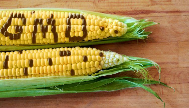Phân biệt thực phẩm GMO và thực phẩm truyền thống