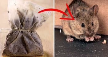 Get Rid of Spider and Mice