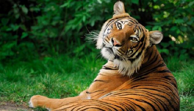 पटना से असम जाएगी भवानी बाघिन