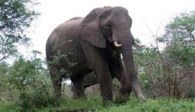 जंगली हाथी ने छह घरों को किया तबाह, जमकर मचाया तांडव