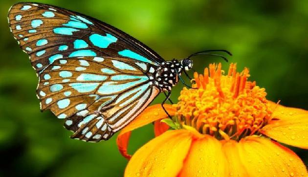 रंगबिरंगी तितलियों को देखकर एक बार फिर से जी लीजिये अपना बचपन