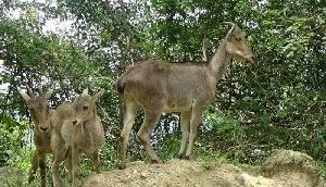 दुर्लभ प्राणियों के देखना है तो जरूर जाएं इरविकुलम नैशनल पार्क