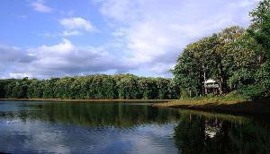 शहर की आपाधापी से दूर कुछ पल बिताइए असम के जंगलो में