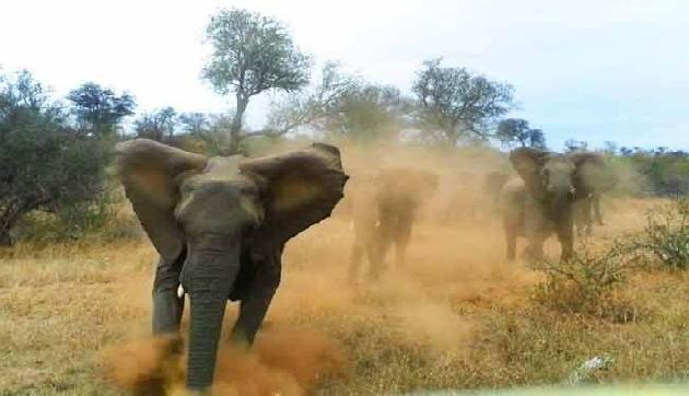 गांव में छाया जंगली हाथियों का आतंक, कई घरों को किया तहस-नहस