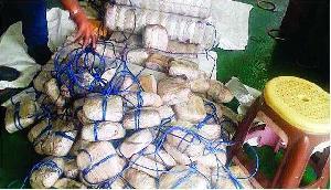 खुफिया विभाग ने मेघालय में किया दो टन से ज्यादा गांजा बरामद, एक गिरफ्तार