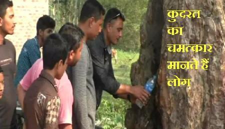 असम में कुदरत का चमत्कार, बैहाटा में पेड़ से निकलता है पानी!