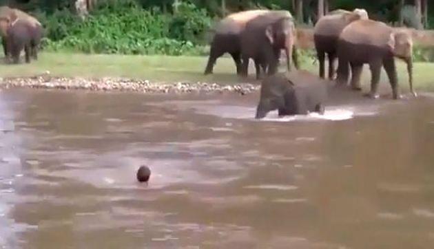 युवक को बचाने लिए नदी में कूदा हाथी, किनारे तक पहुंचा कर ही लिया दम