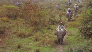 काजीरंगा ही नहीं असम में है एक और शानदार नेशनल पार्क