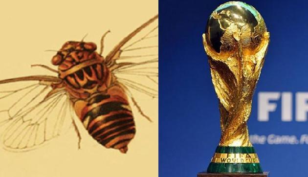 मेघालय में होगा कीड़ों का विश्व कप, है अनोखी कहानी