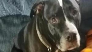 OMGः मालिक को कुत्ते ने मारी गोली, जानिए कैसे हुआ ये हादसा