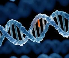 Kết quả hình ảnh cho gen