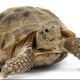 Turtle_Investor