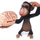 monkeybrainpic