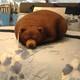 Bear_is_friendly
