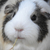 Sisley_Zhou avatar