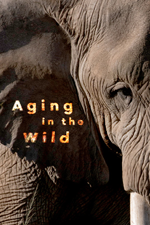 Aging In The Wild
