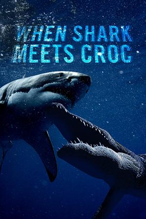 When Shark Meets Croc