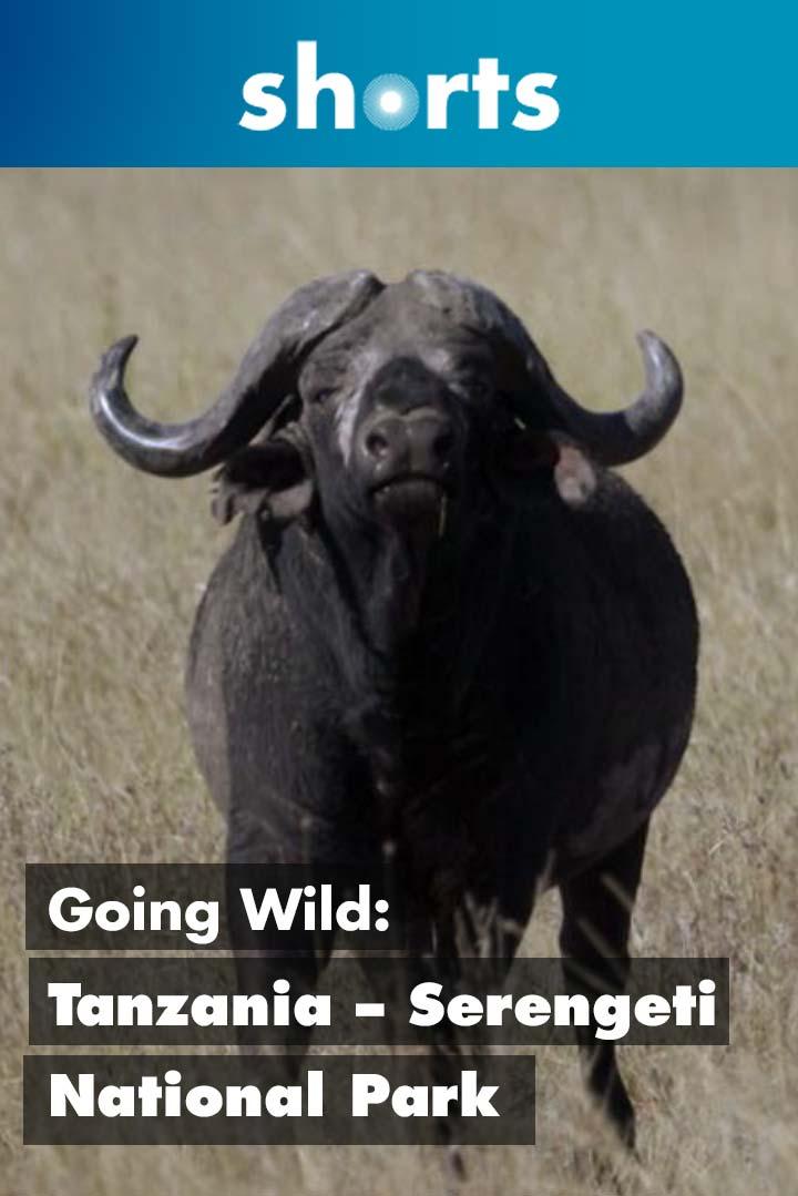 Going Wild: Tanzania Serengeti National Park