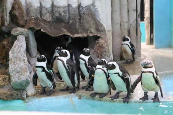 Grab Your Scoop on the Ever-Popular Sightseeing Destination in Tokyo, Ueno Zoo!