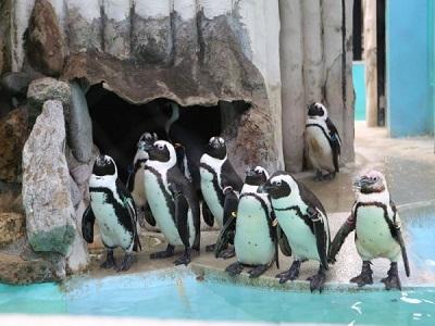 Kunjungi Binatang Terlangka di Dunia di Kebun Binatang Sekaligus Tujuan Wisata Paling Populer di Jepang, Ueno Zoo!