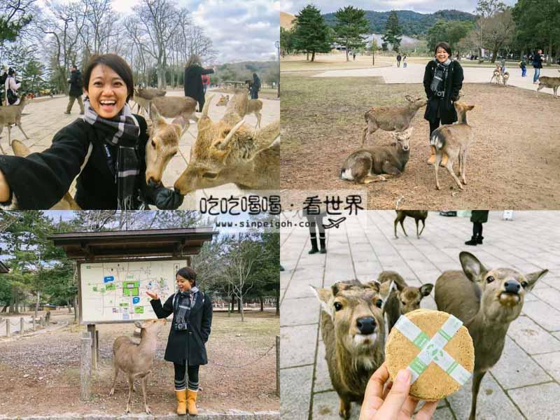 吃吃喝喝看世界 奈良公園