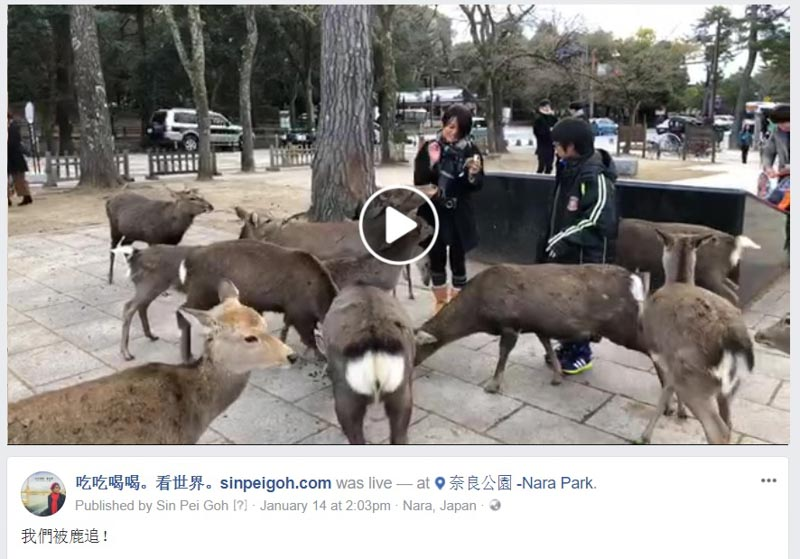 吃吃喝喝看世界 奈良公園被鹿追