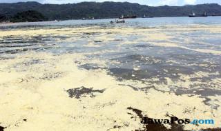 Teluk Bayur tercemar
