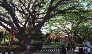 Pohon Heritage