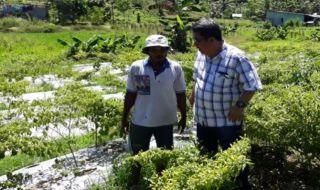 Lahan Hortikultura
