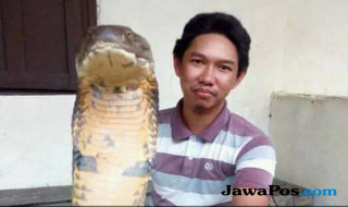 Made Dwi Sudarmawan, ular king cobra