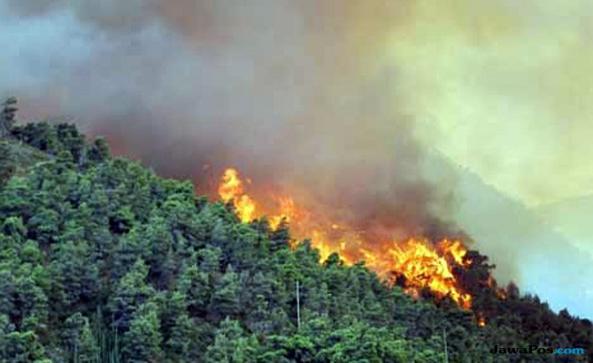 Strategi APP Atasi Kebakaran Hutan di Wilayah Konsesi