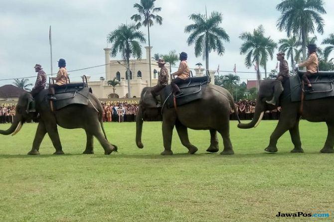 Atasi Konflik dengan Manusia, Tiga Gajah PLG Riau Dikirim ke Jambi