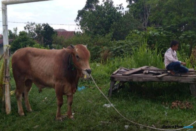 Bupati Tuban Tekankan Daging Kurban Harus Disalurkan Pada yang Berhak