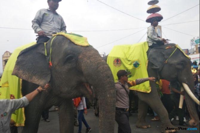 Dua Sejoli, Agam dan Kartijah Jadi Gajah Pengiring Zulkifli Hasan