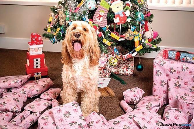 Hadiah Natal Rp 18 Juta untuk Anjing