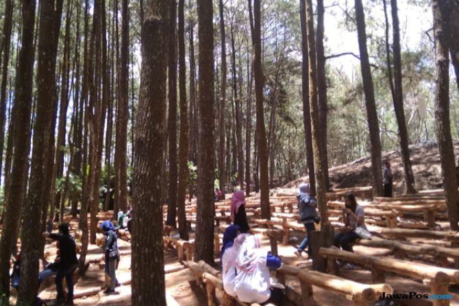 Hutan Pinus Mangunan, Sediakan Wisata Edukatif Untuk Pengunjung