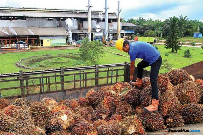 Jurus Pengendalian Impor Dan Kurangi Pungutan Ekspor CPO
