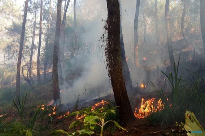 Kembali Terbakar, 15 hektare Lahan Gunung Panderman Hangus