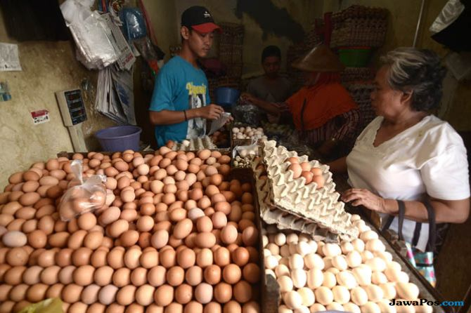 Pakan Ternak Langka, Ini Gerak Pemerintah Atasi Kenaikan Harga Telur