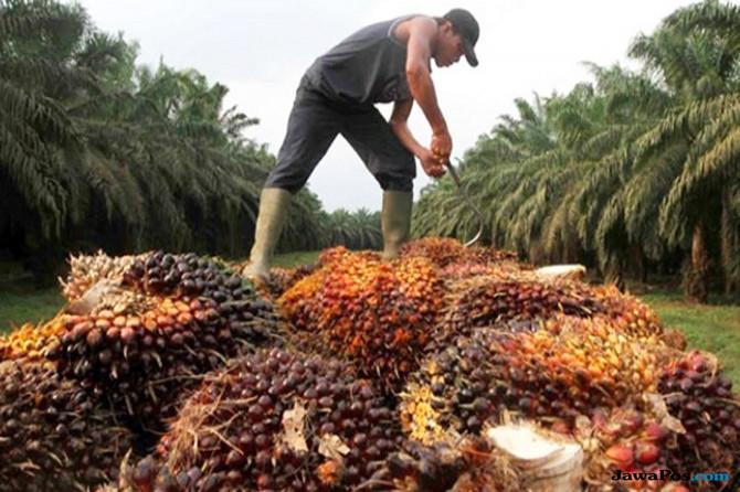 Pasar India dan Pakistan Melesu, Ekspor CPO Indonesia Tergerus
