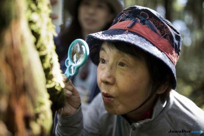Pegunungan di Jepang Ini Populer bagi Penggemar Lumut