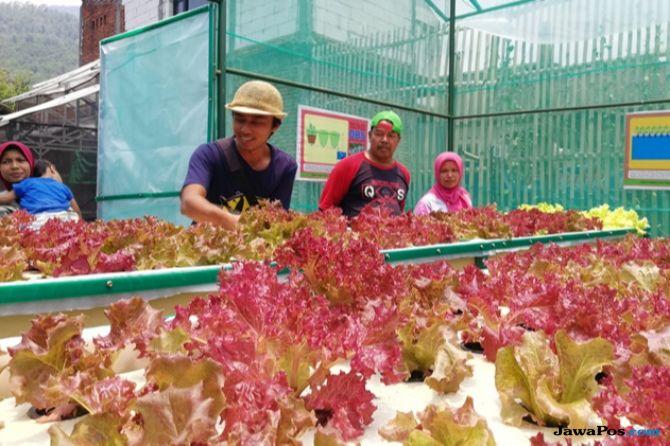 Petani Hidroponik Gelar Aksi Jual Sayur untuk Korban Gempa Sulteng