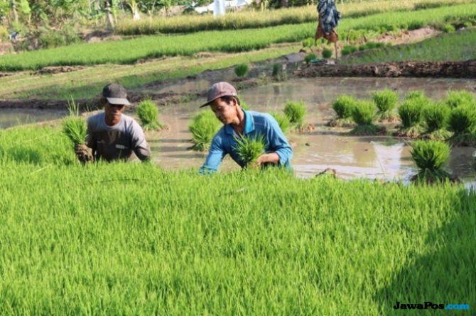 Sandi Akan Dorong Pemanfaatan Teknologi Guna Pacu Produktivitas Petani