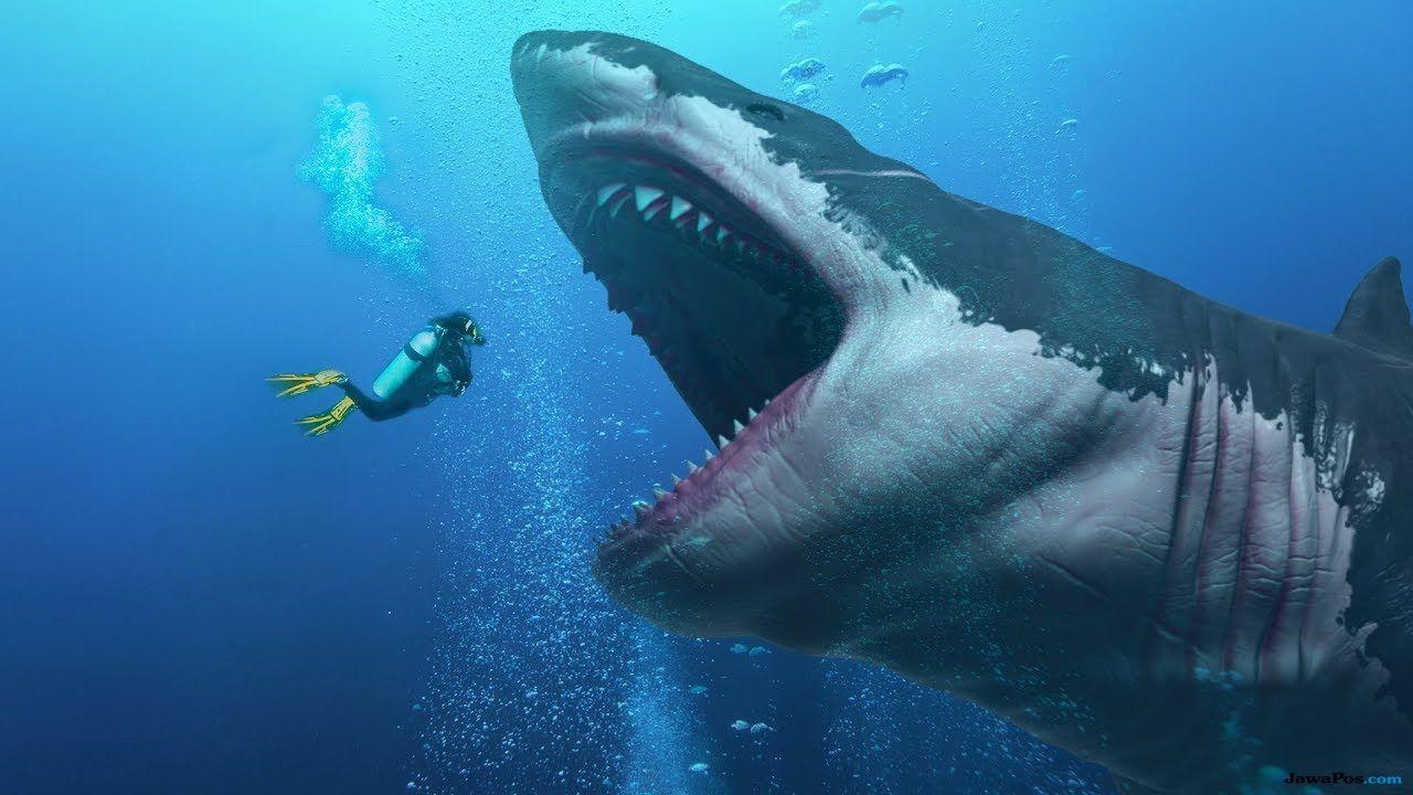 hiu, megalodon, aldi hilang di laut,
