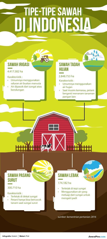 Anak Muda Tak Mau Jadi Petani, Lahan Pertanian Semakin Berkurang