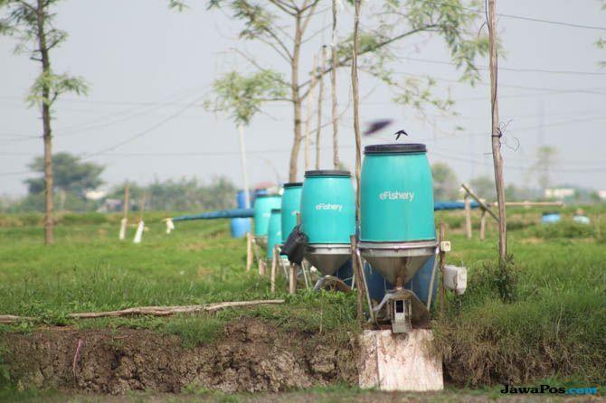Penerapan agrikultur (AgTech) dengan eFishery. Foto: Jawa Pos/eFishery