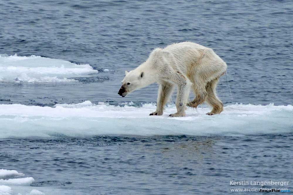 suhu global, pemanasan global, suhu,