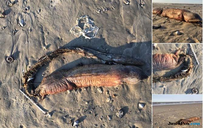 Spesies Aneh Ini Terbawa Arus ke Pantai Setelah Badai Harvey