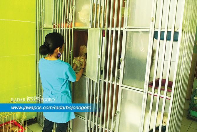 LARIS : Seorang petugas jasa penitipan hewan sedang merawat hewan yang sedang dititipkan. Menjelang lebaran kebanjiran order.