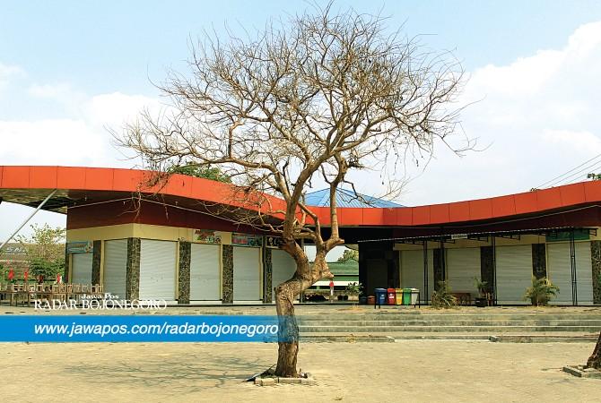 Pohon Rajekwesi Kering